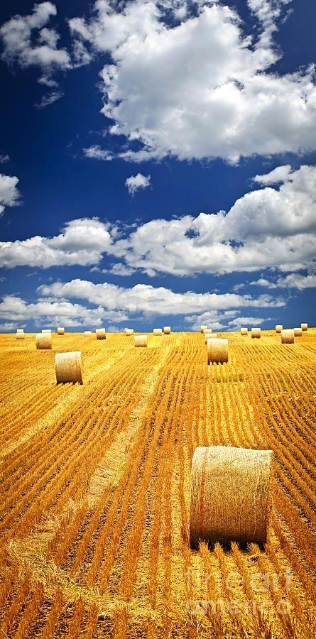 Il grano degli antichi Romani per muovere l'economia
