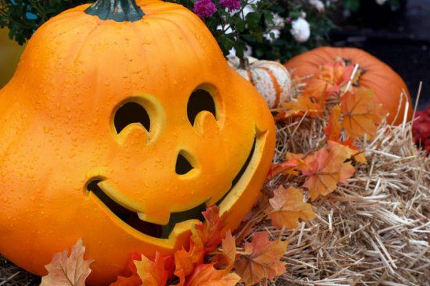 Halloween: cupcake vegano alla zucca