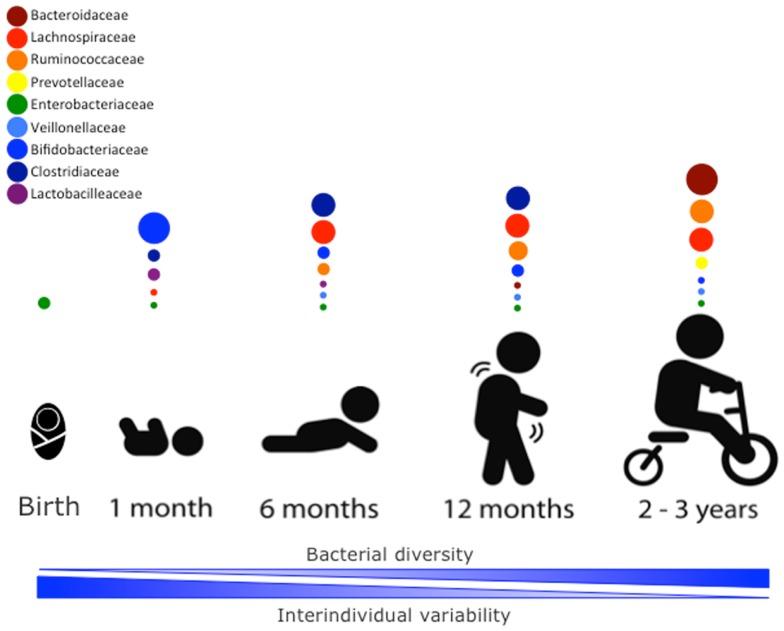 Il microbioma nei primi anni di vita: conseguenze ed effetti sulla salute
